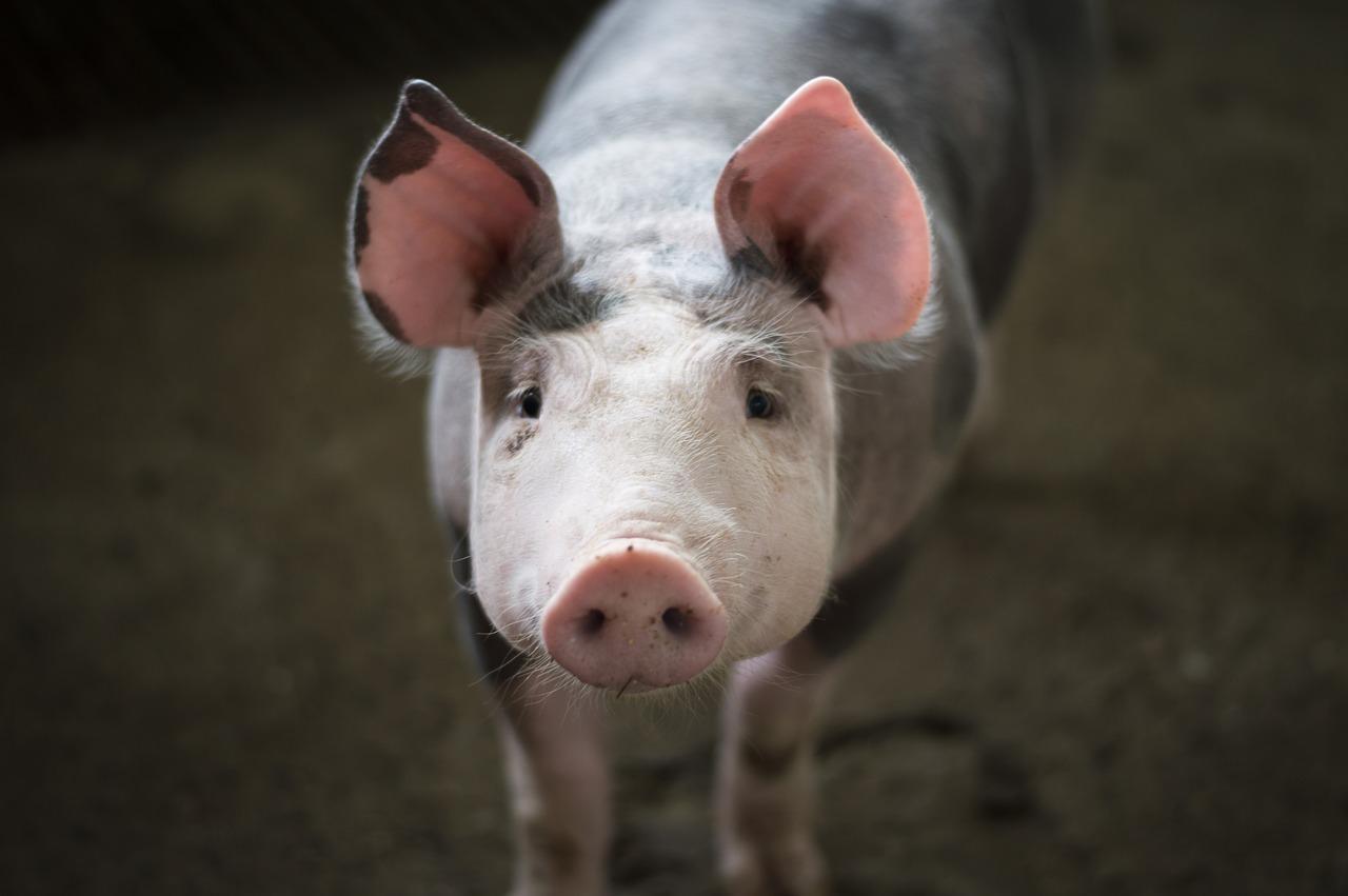 Europa regulará las visitas veterinarias periódicas